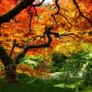 treeadjustedcolorslowjpxx4